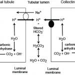 Bicarbonate reclaimation